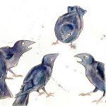 Crow Calls twitter